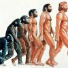 チバシアン時代の地層はどこ?認定可能性と時期はいつ?